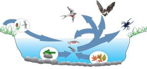 biodiv_0803_sjoekosystem