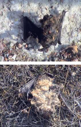 biodiv_08_1_fladdermoss