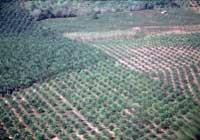 biodiv_08_1_plantage
