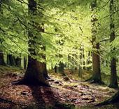 biodiverse08_4_skog