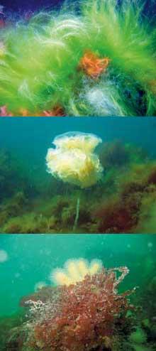 3-hav-bilder