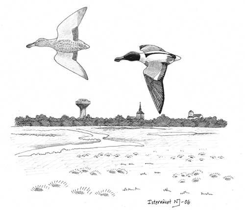 ritade-birds